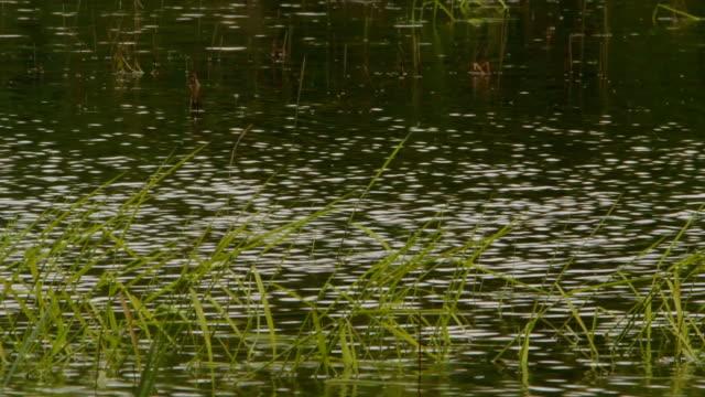 Light ripples on water video