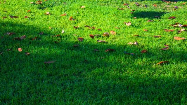 Light shade motion on green grassland 4K DCI