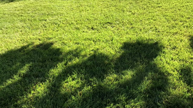 Light shade motion on green grassland Full HD