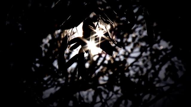 light through the trees (hd) - eucalyptus leaves bildbanksvideor och videomaterial från bakom kulisserna