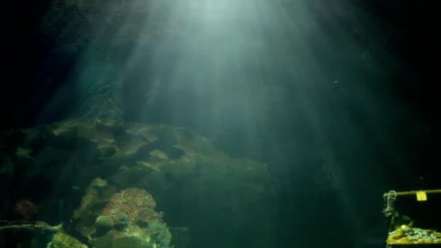 light under sea water video