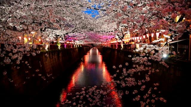 stockvideo's en b-roll-footage met cherry blossom sakura op meguro rivier oplichten - bloesem