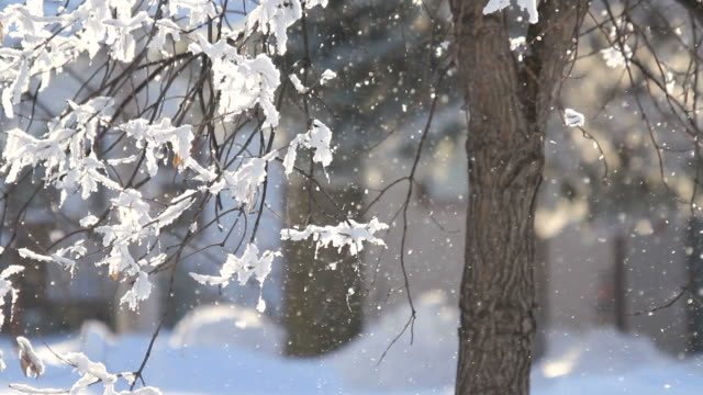 light winter snow blurred background video