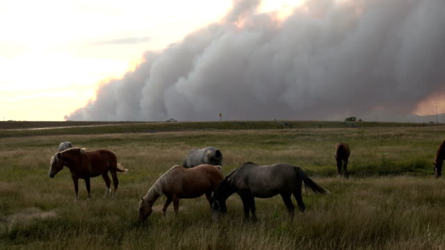 Lightning caused Arapahoe forest fire burns over horses grazing Wheatland Wyoming Rocky Mountains video