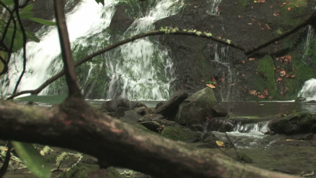 stockvideo's en b-roll-footage met lil waterfall 128 - hd 30f - boomstam
