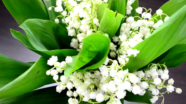 lilies of the valley in a vase - lilia filmów i materiałów b-roll