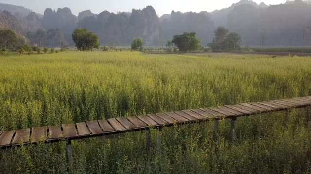 Limestone mountain range with Sunn hemp flower field travel attraction in Noen Maprang district, Phitsanulok, Thailand