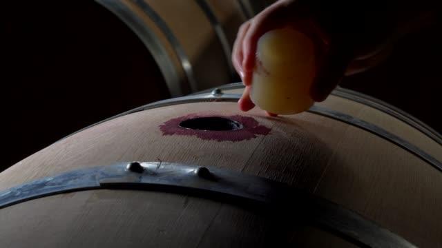 vídeos de stock e filmes b-roll de line of oak barrel in a cellar for a wine perfect fermentation, bordeaux vineyard, france - barrica