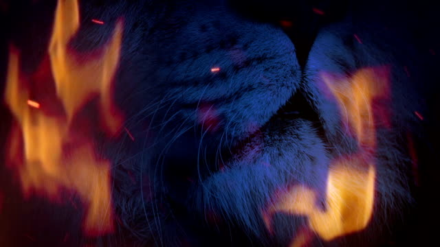 Lion Roars In Raging Fire Abstract