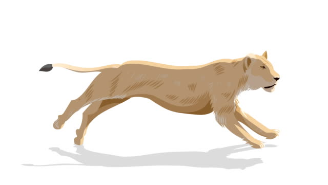 Lion Running animation