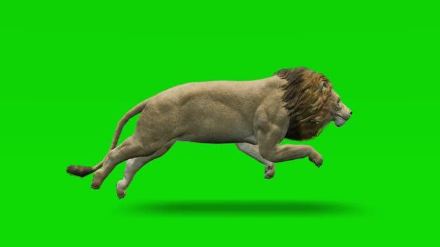 vídeos de stock, filmes e b-roll de leão executando animação em câmera lenta na tela verde. o conceito de animal, vida selvagem, jogos, de volta à escola, animação 3d, vídeo curto, filme, desenho animado, orgânico, chave croma, animação de personagem, elemento de design, loopable - felino