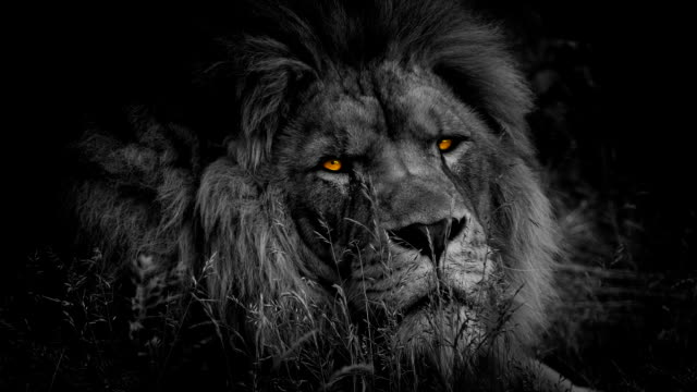 Lion Turns Around With Fiery Eyes Abstract video