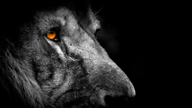 Lion With Orange Eyes Abstract