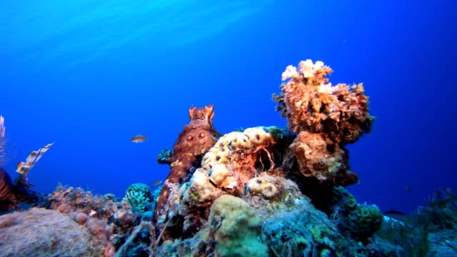 Lionfish and Octopus under Blue Sea Red octopus (Octopus cyanea) and  lionfish (Pterois miles). Underwater fish reef marine. Tropical colorful underwater seascape. Reef coral scene. Coral garden seascape. Colorful tropical coral reefs aquatic organism stock videos & royalty-free footage