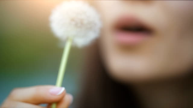 Lips of a woman Blowing on a Dandelion Woman blowing dandelion seeds at sunset dandelion stock videos & royalty-free footage