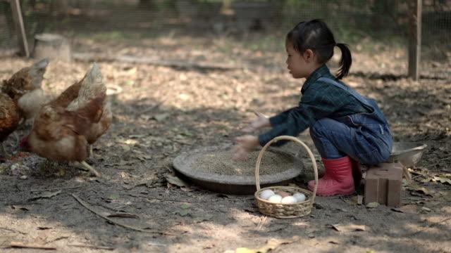la bambina asiatica che nutre la gallina felicemente e si gode nell'allevamento di polli. primo apprendimento dei bambini piccoli. felice concetto di famiglia. - bestiame video stock e b–roll