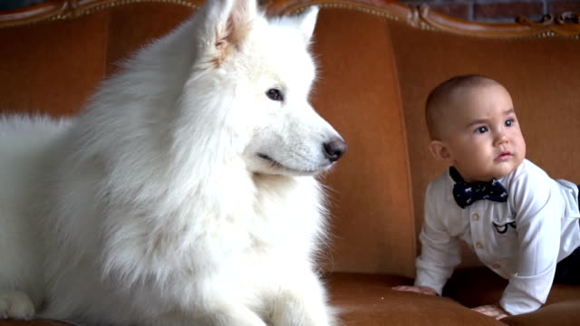 A little baby boy and big white dog look at each other on sofa video