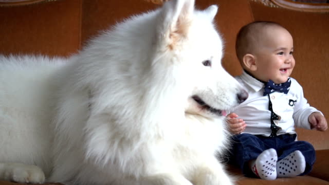 A little baby boy sitting with his freind - big white dog on sofa video