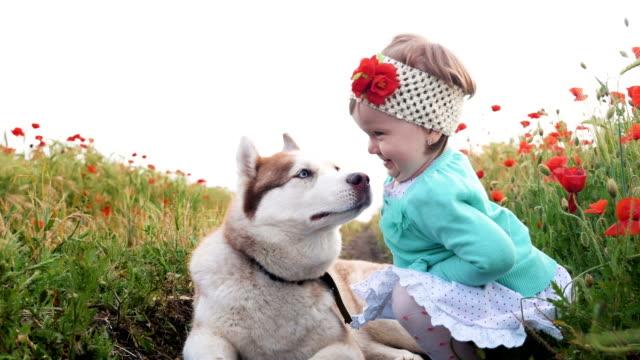Royalty Free Baby Husky Hd Video 4k Stock Footage B Roll Istock