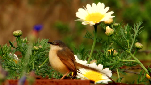 a little bird among the flowers - park narodowy kanha filmów i materiałów b-roll