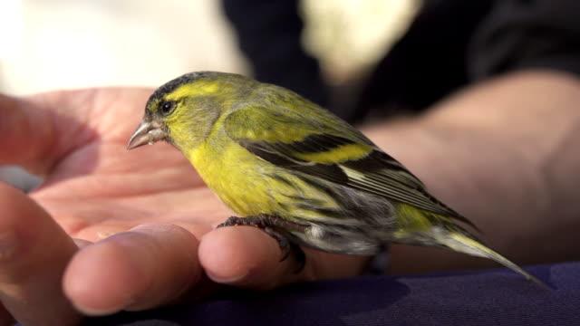 little bird sitting on man's hand - djurarm bildbanksvideor och videomaterial från bakom kulisserna