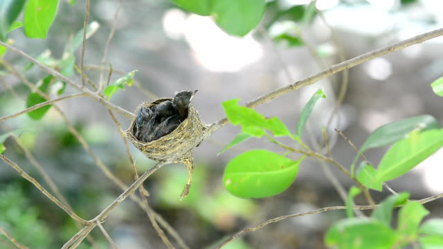 Little birds in a nest video