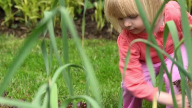 little blond girl picks lettuce - endast flickor bildbanksvideor och videomaterial från bakom kulisserna