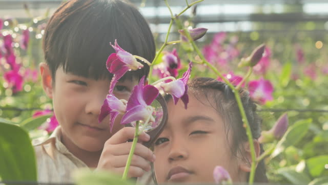 Little boy and girl child exploring nature in a garden with a magnifying glass looking for insects.Eduction,Children,People,Technology,Springtime,Science,Summer,Fun concept.