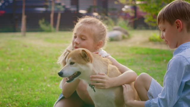 vídeos de stock e filmes b-roll de little boy and girl play with cute shibu dog, children pet the dog in the backyard. sunny summer day. - pets