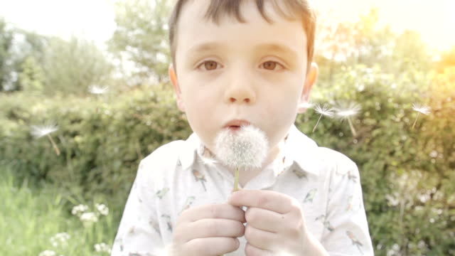 Little Boy Blowing The Seeds Off A Dandelion video