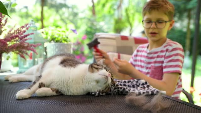 vídeos de stock, filmes e b-roll de garotinho escovando seu gato no jardim - felino