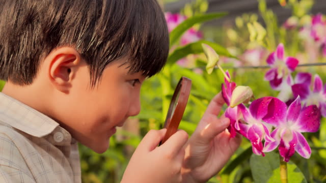 Little boy child exploring nature in a garden with a magnifying glass looking for insects.Eduction,Children,People,Technology,Springtime,Science,Summer,Fun concept.
