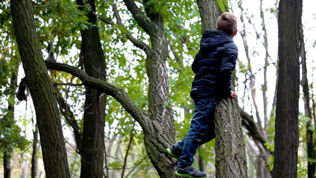 little boy climb the old tree - albero caduto video stock e b–roll