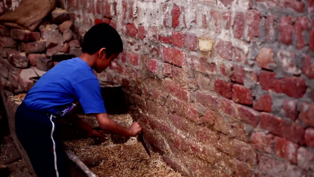Little boy collecting food for domestic animal - video