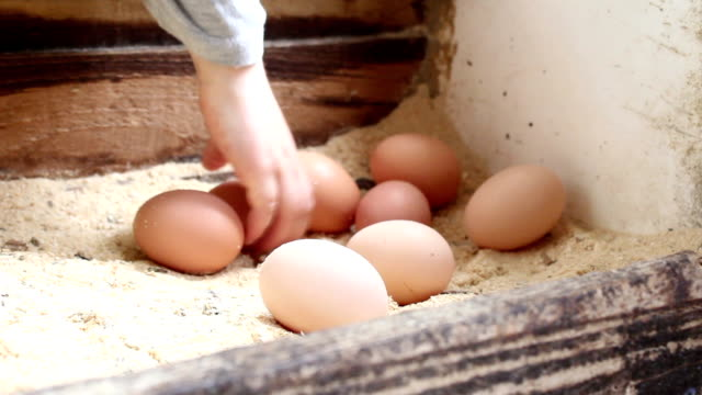 Little Boy Collects Eggs video