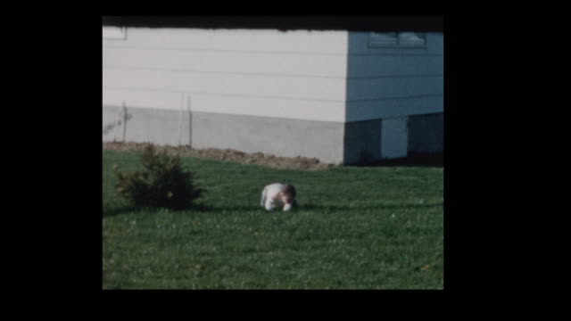 1960 little boy crawling around on grass in backyard - hotel reception filmów i materiałów b-roll