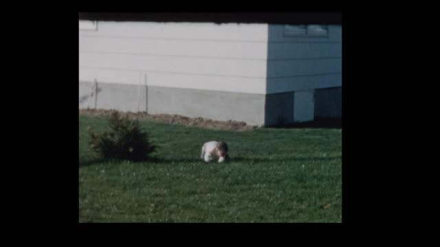 1961 little boy crawling around on grass in backyard - hotel reception filmów i materiałów b-roll