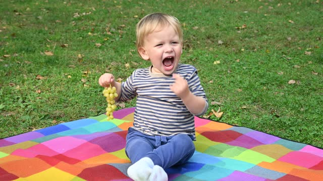 Little boy eating grapes on picnic