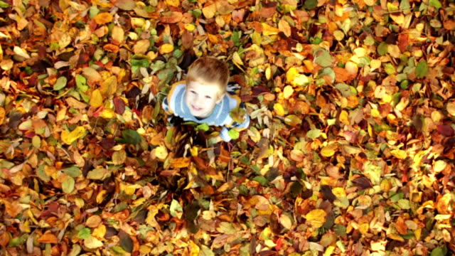 CRANE SHOT: Little boy having fun with autumn leaves Crane shot of little boy playing with leaves on sunny autumn day. High angle view. * one boy only stock videos & royalty-free footage