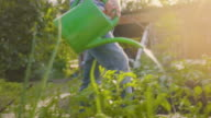 istock Little Boy Helping With the Garden 1241880748