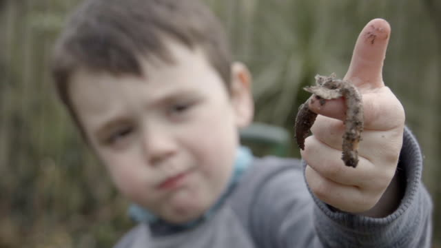 stockvideo's en b-roll-footage met little boy holding up a garden worm when digging garden - worm