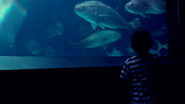 Little boy looking at fish tank影片