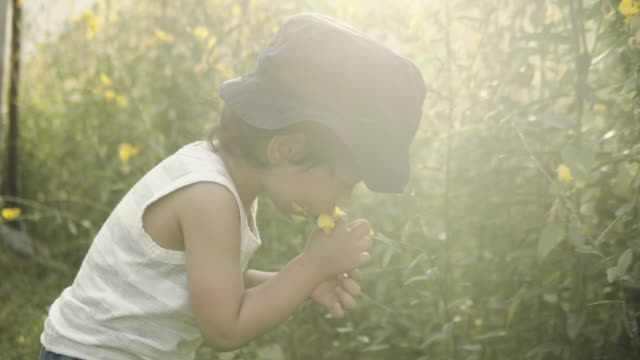 Little boy picking flowers