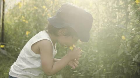 Little boy picking flowers Little boy catching bubbles in buckwheat field childhood stock videos & royalty-free footage