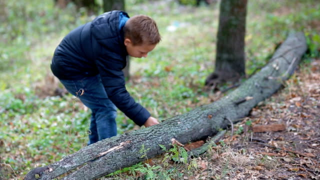 Little boy play with a fallen tree video