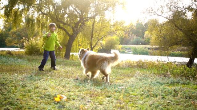 stockvideo's en b-roll-footage met kleine jongen spelen met collie hond op de herfst bos - teenager animal