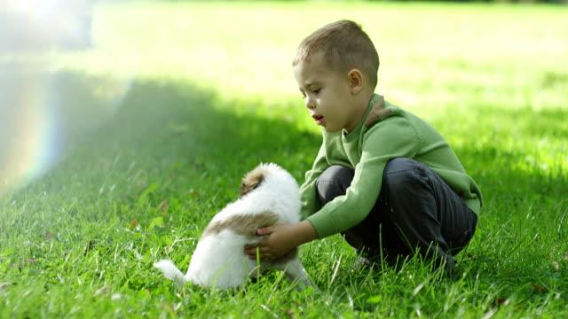 bambino che gioca con il cucciolo nel parco - bambino cane video stock e b–roll