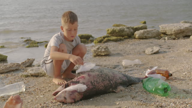a little boy removes plastic bags from a dead dolphin lying on the beach. environmental disaster concept - cadavere video stock e b–roll