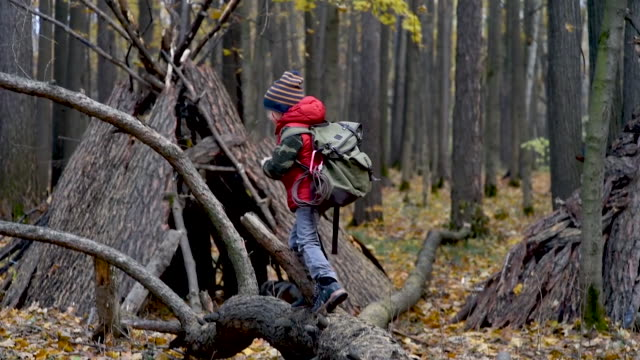 little boy scout with backpack and rope during hiking in autumn forest. child looking at a teepee in the forest. adventure, scouting and hiking tourism for kids. - capanna video stock e b–roll