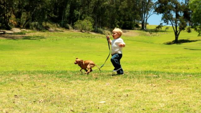 ragazzino cammina un cane nell'erba - bambino cane video stock e b–roll